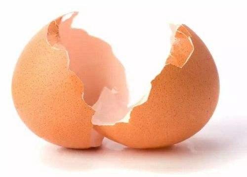 鸡蛋壳垃圾