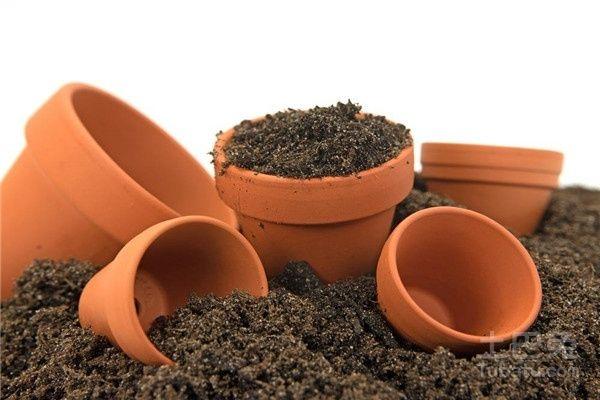 用来种盆栽的泥土