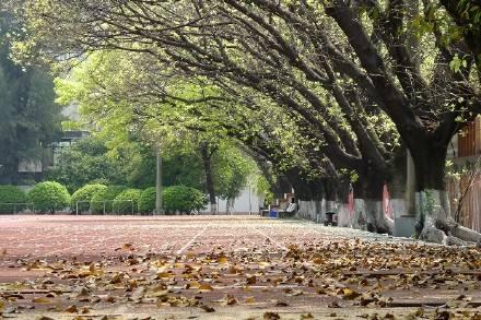 街道上枯萎的树叶