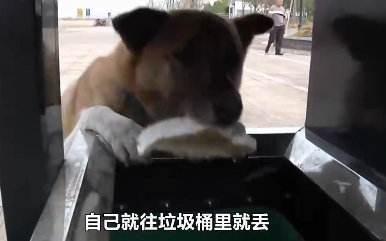 这只中华田园犬是怎么样学会了垃圾分类